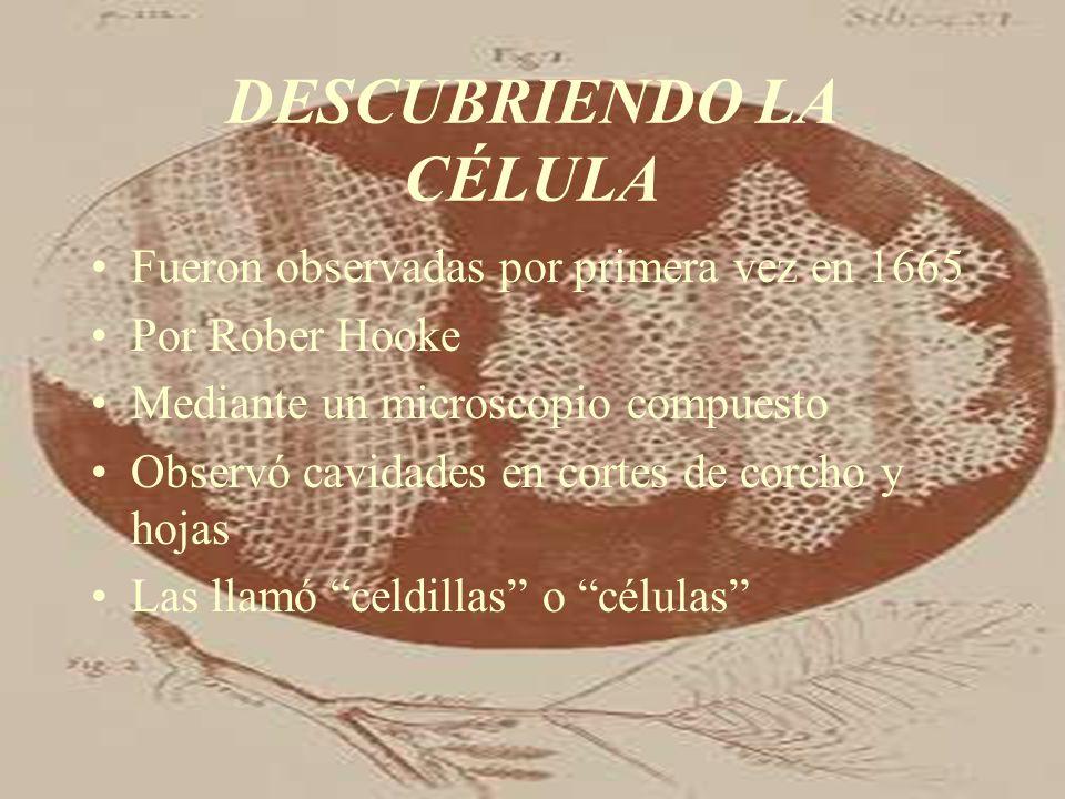 DESCUBRIENDO LA CÉLULA