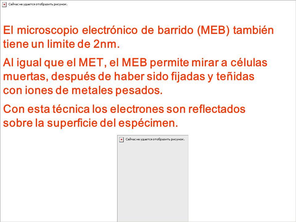 El microscopio electrónico de barrido (MEB) también tiene un limite de 2nm.