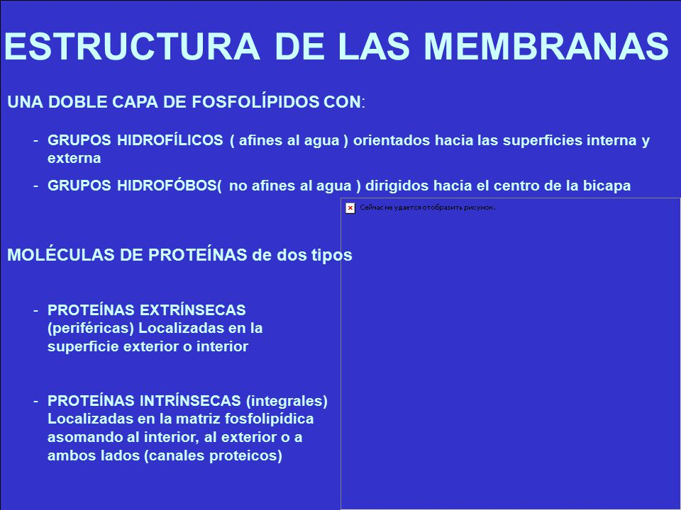 ESTRUCTURA DE LAS MEMBRANAS
