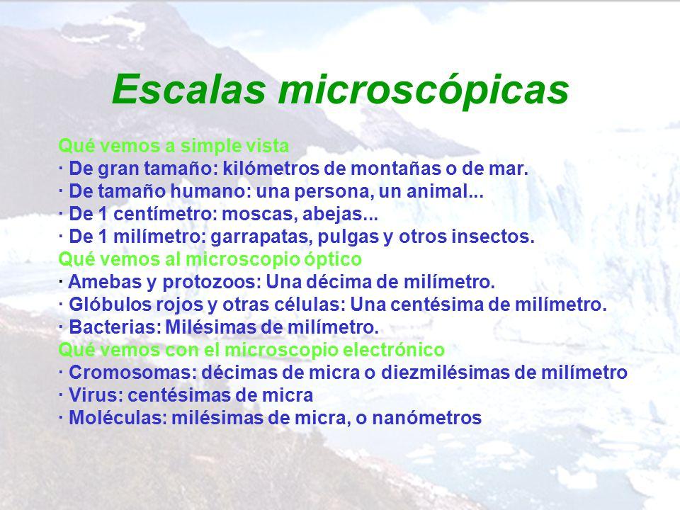 Escalas microscópicas