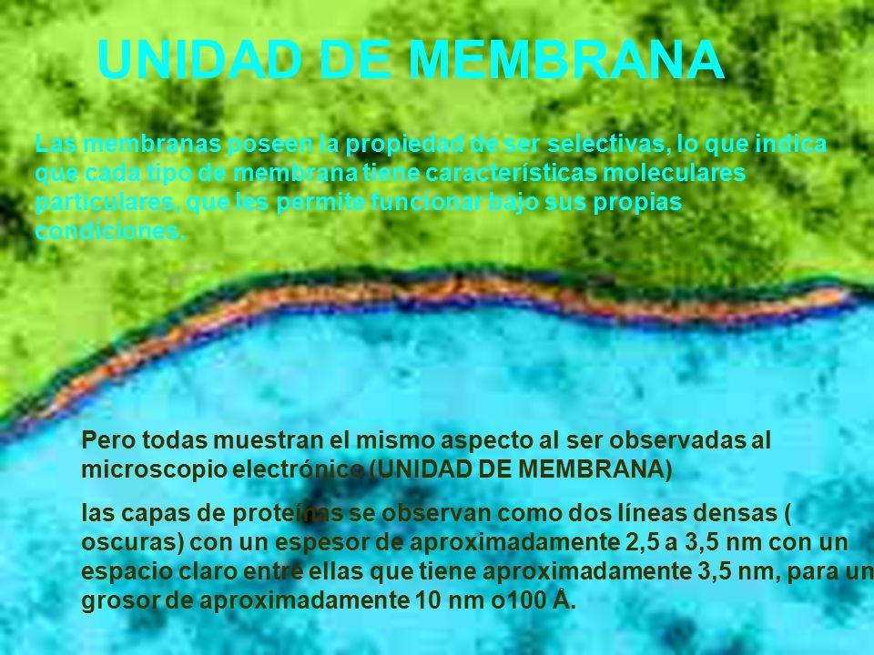 UNIDAD DE MEMBRANA