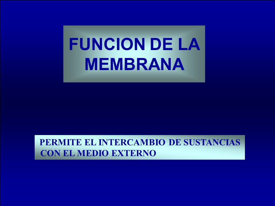 FUNCION DE LA MEMBRANA PERMITE EL INTERCAMBIO DE SUSTANCIAS CON EL MEDIO EXTERNO