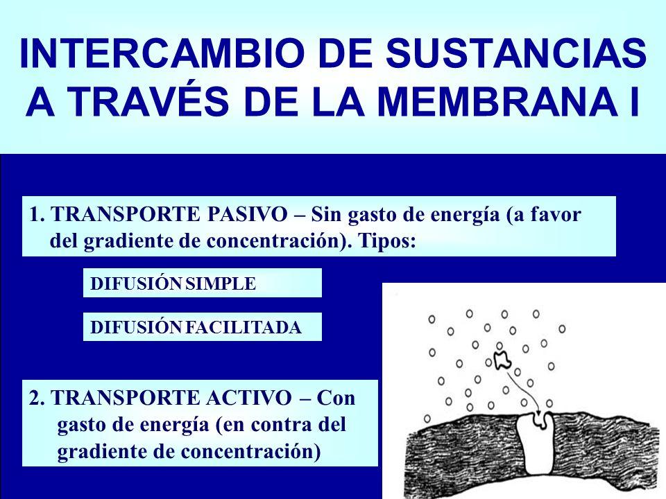 INTERCAMBIO DE SUSTANCIAS A TRAVÉS DE LA MEMBRANA I