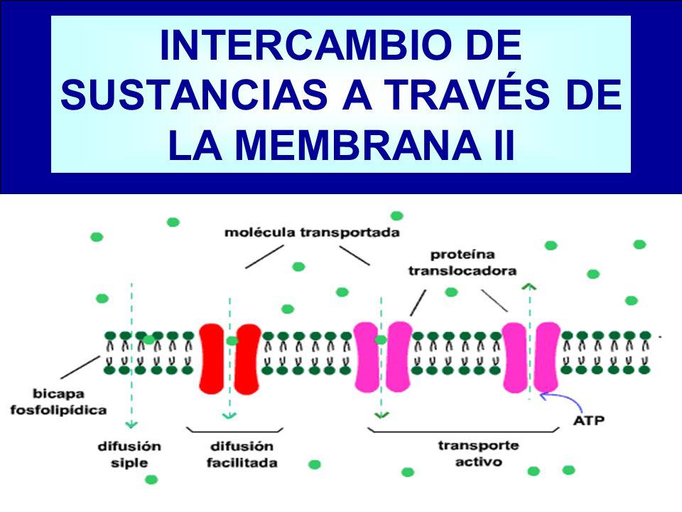 INTERCAMBIO DE SUSTANCIAS A TRAVÉS DE LA MEMBRANA II