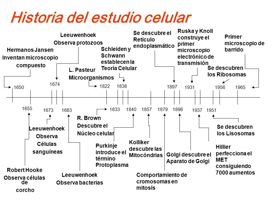 Historia del estudio celular