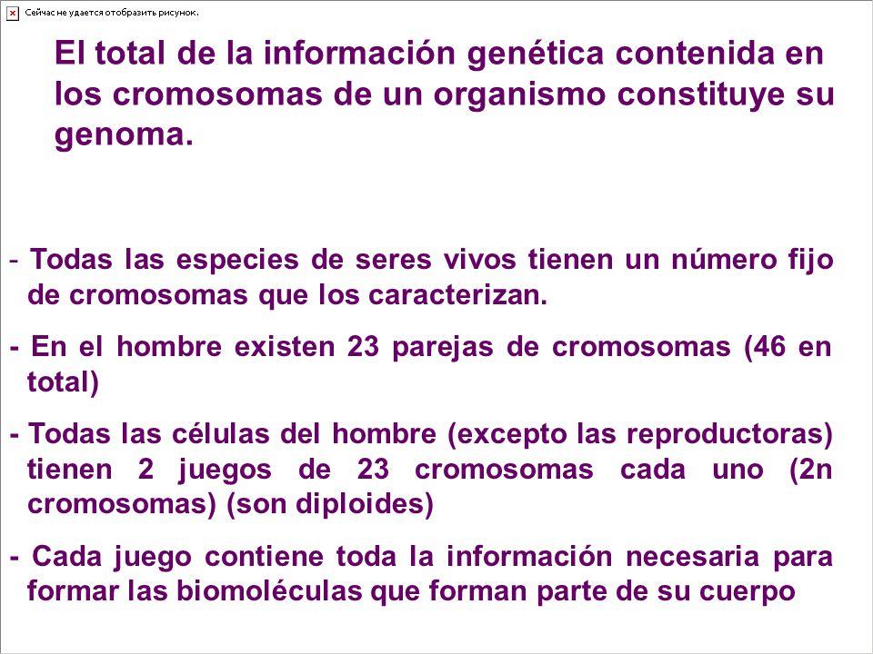 El total de la información genética contenida en los cromosomas de un organismo constituye su genoma.