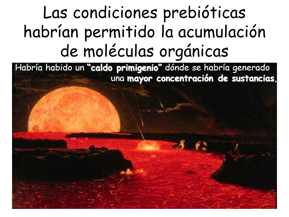 Las condiciones prebióticas habrían permitido la acumulación de moléculas orgánicas