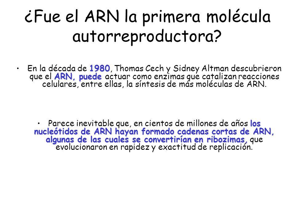 ¿Fue el ARN la primera molécula autorreproductora