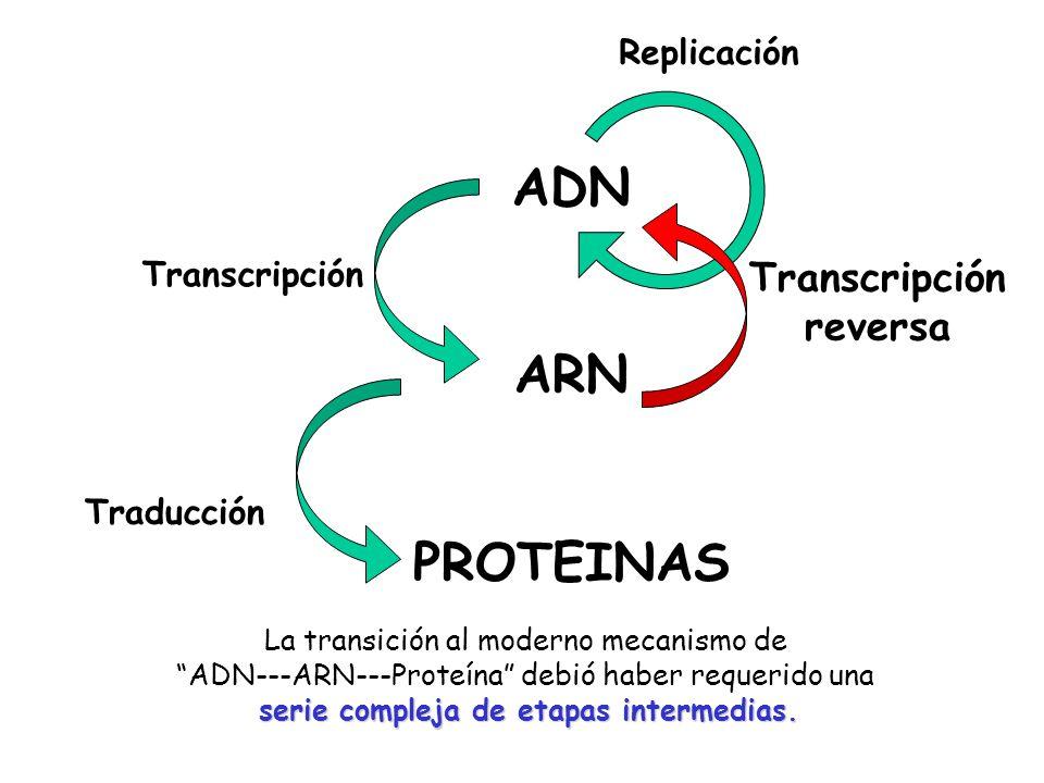 Transcripción reversa serie compleja de etapas intermedias.