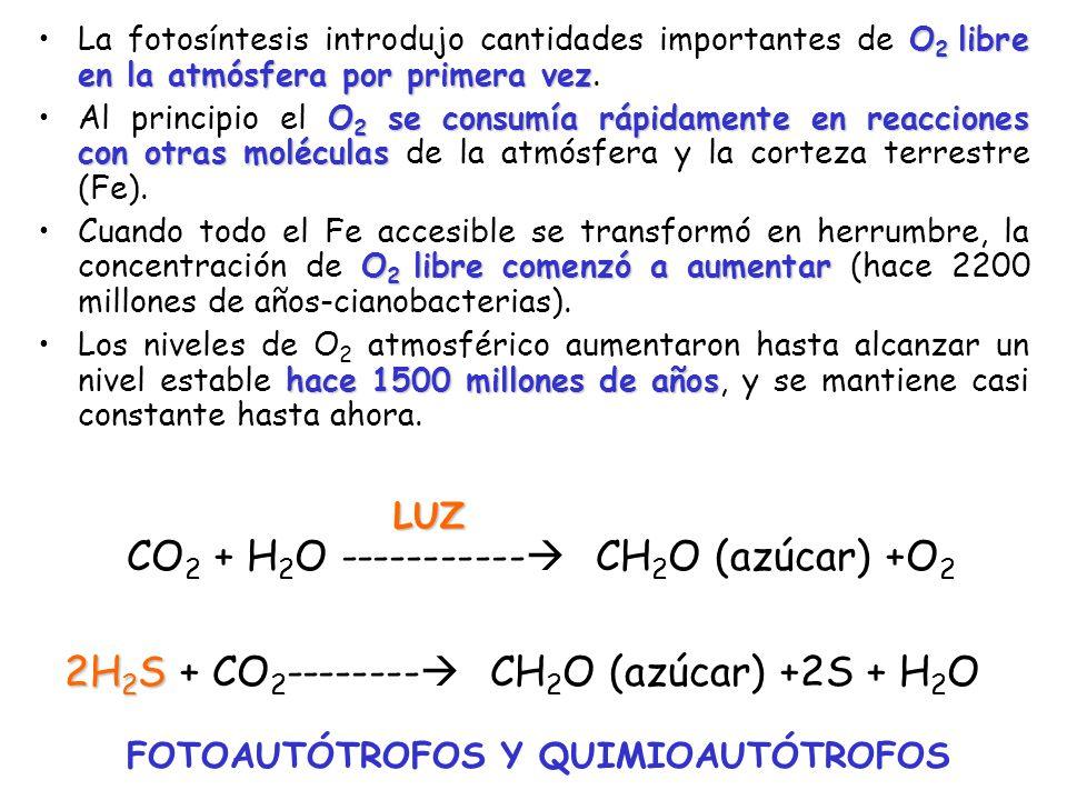 CO2 + H2O ----------- CH2O (azúcar) +O2