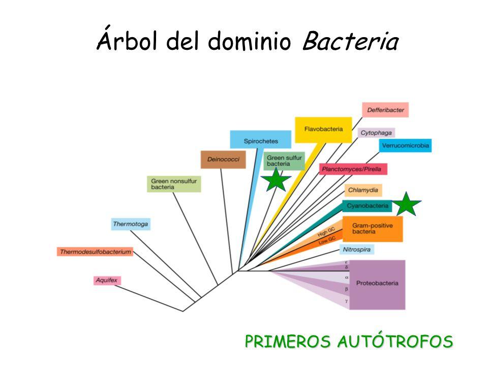 Árbol del dominio Bacteria