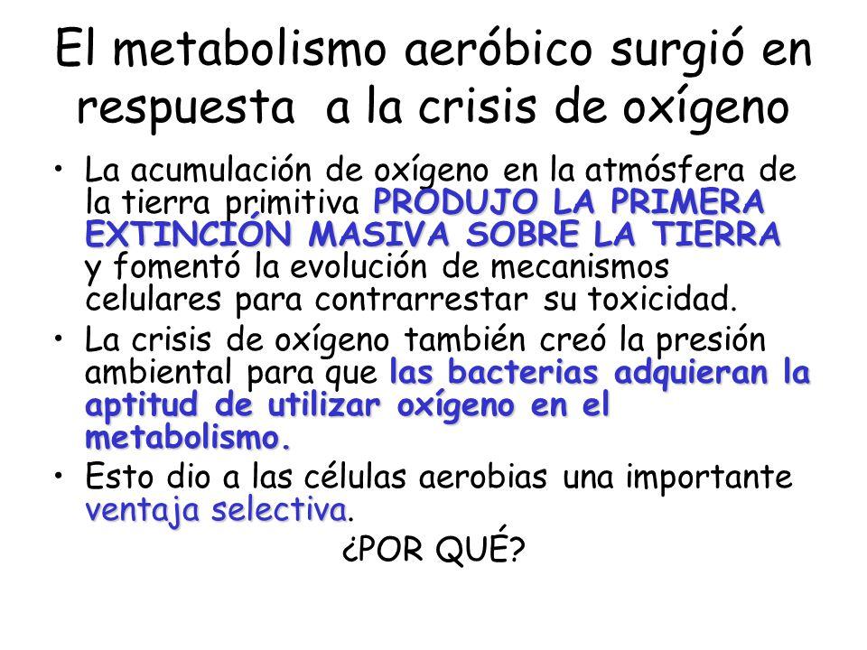 El metabolismo aeróbico surgió en respuesta a la crisis de oxígeno