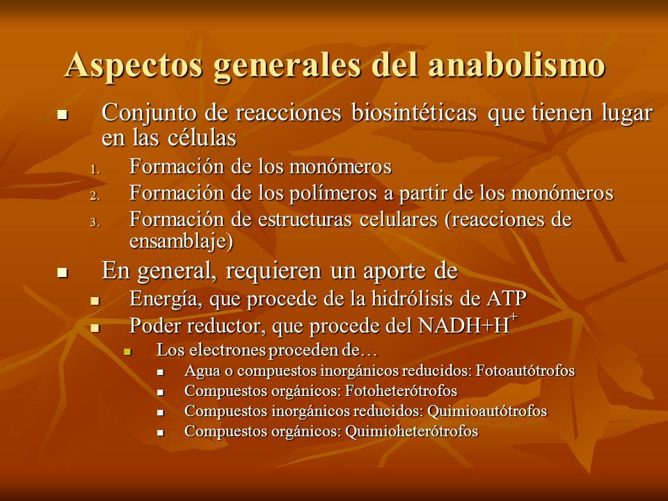 Aspectos generales del anabolismo