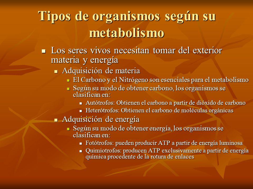 Tipos de organismos según su metabolismo
