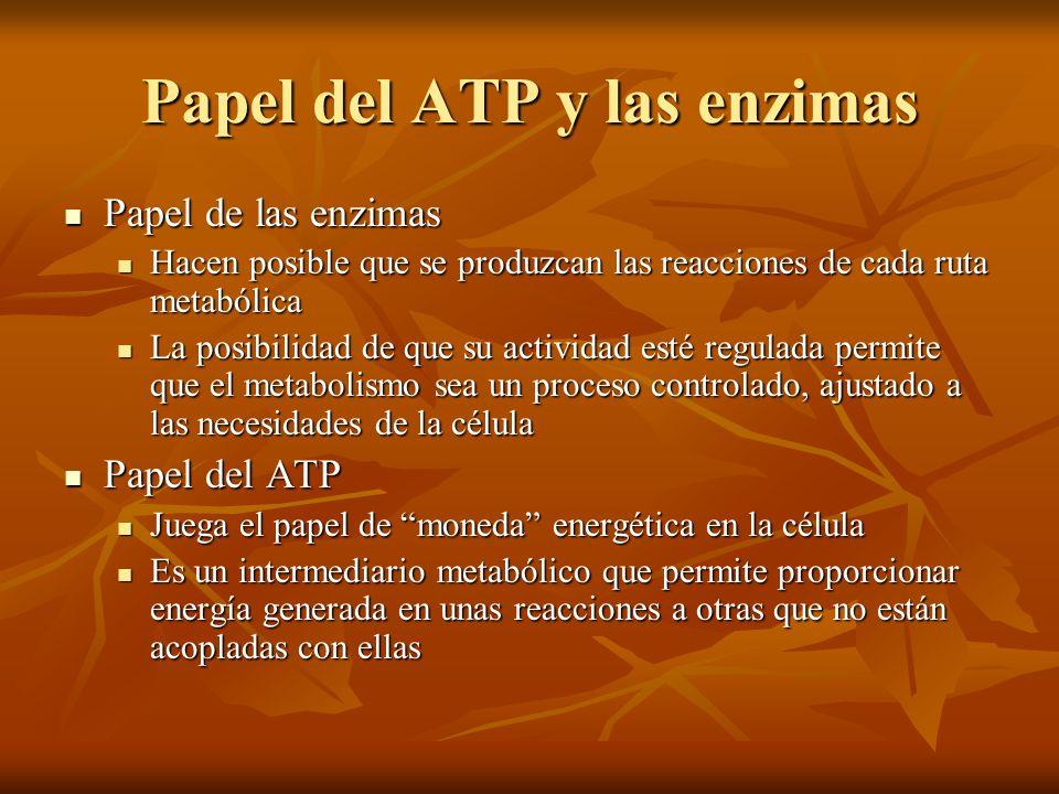 Papel del ATP y las enzimas