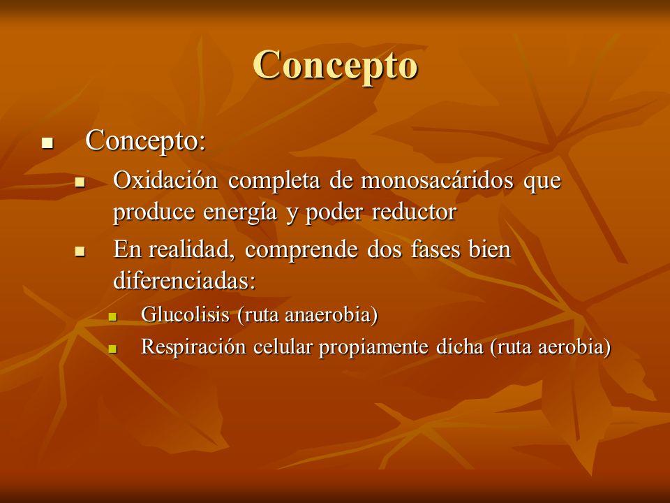 Concepto Concepto: Oxidación completa de monosacáridos que produce energía y poder reductor. En realidad, comprende dos fases bien diferenciadas: