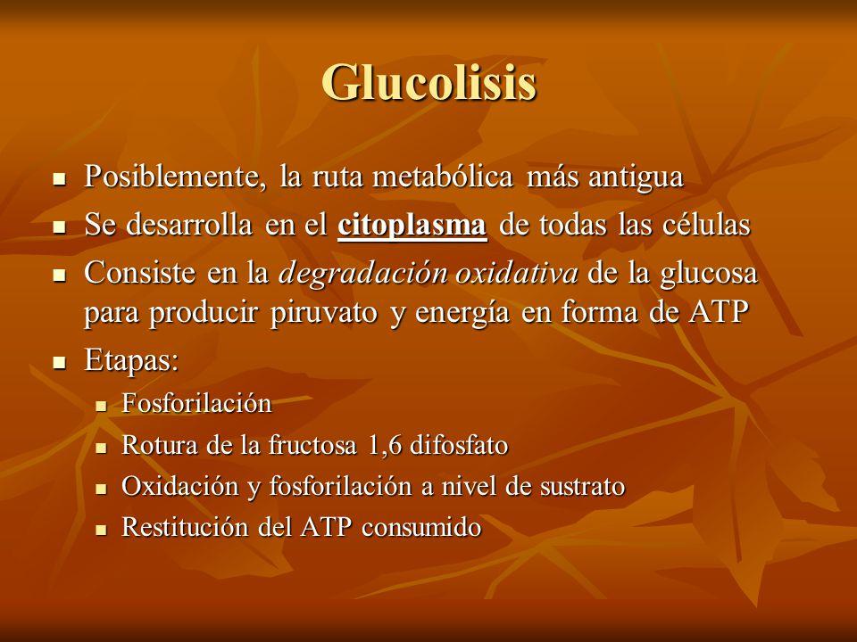 Glucolisis Posiblemente, la ruta metabólica más antigua