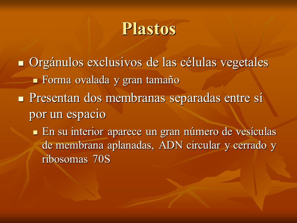 Plastos Orgánulos exclusivos de las células vegetales