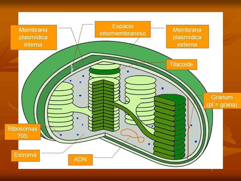 Estructura de los plastos