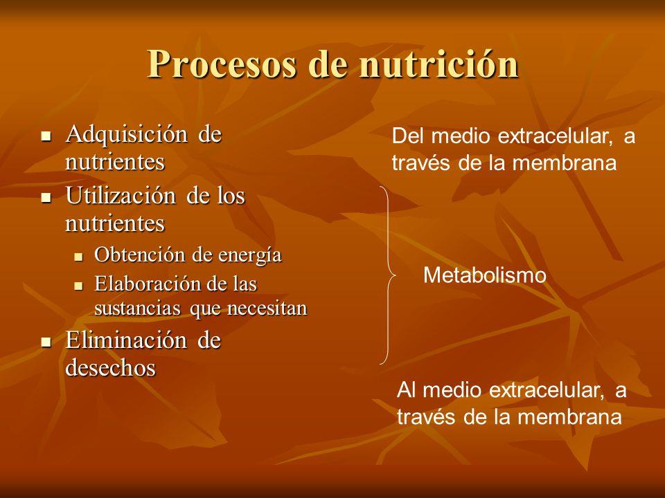 Procesos de nutrición Adquisición de nutrientes