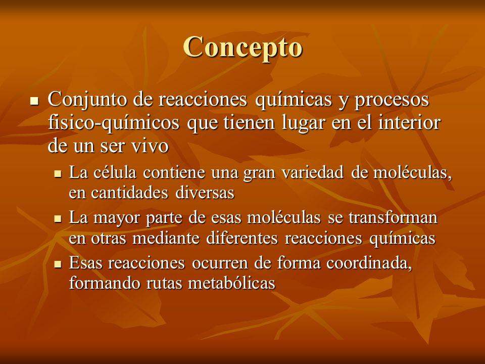 Concepto Conjunto de reacciones químicas y procesos fisico-químicos que tienen lugar en el interior de un ser vivo.