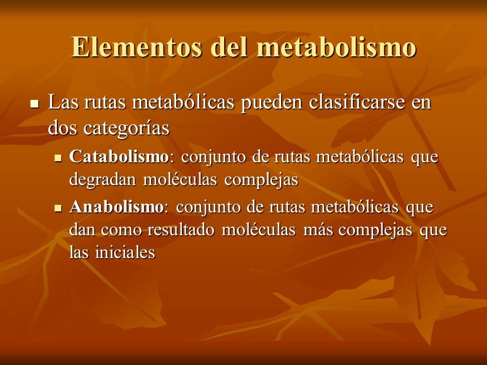 Elementos del metabolismo