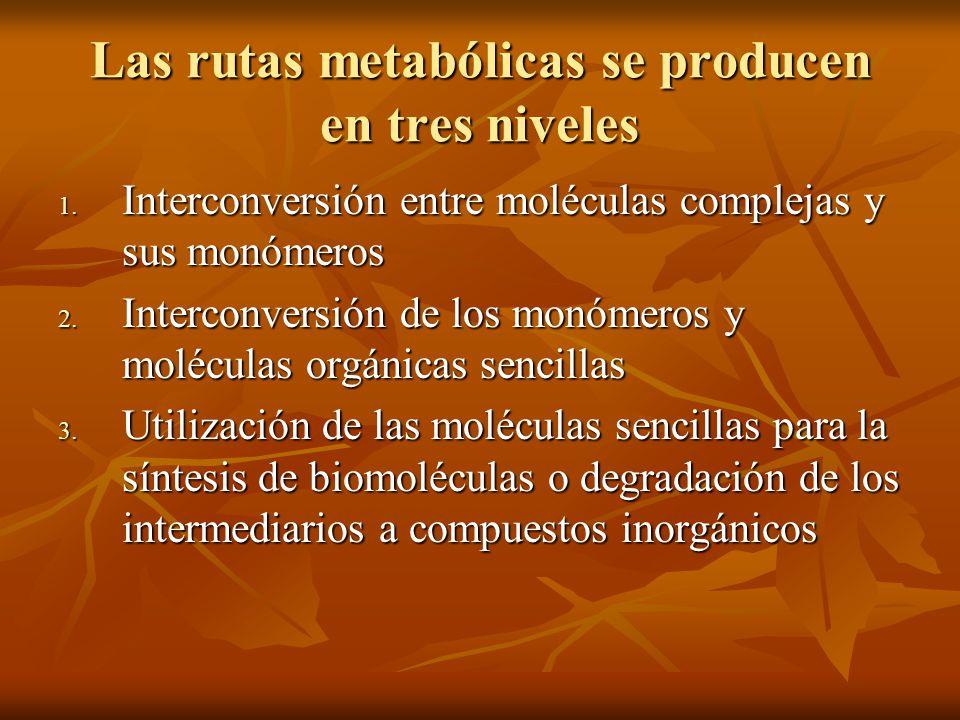 Las rutas metabólicas se producen en tres niveles