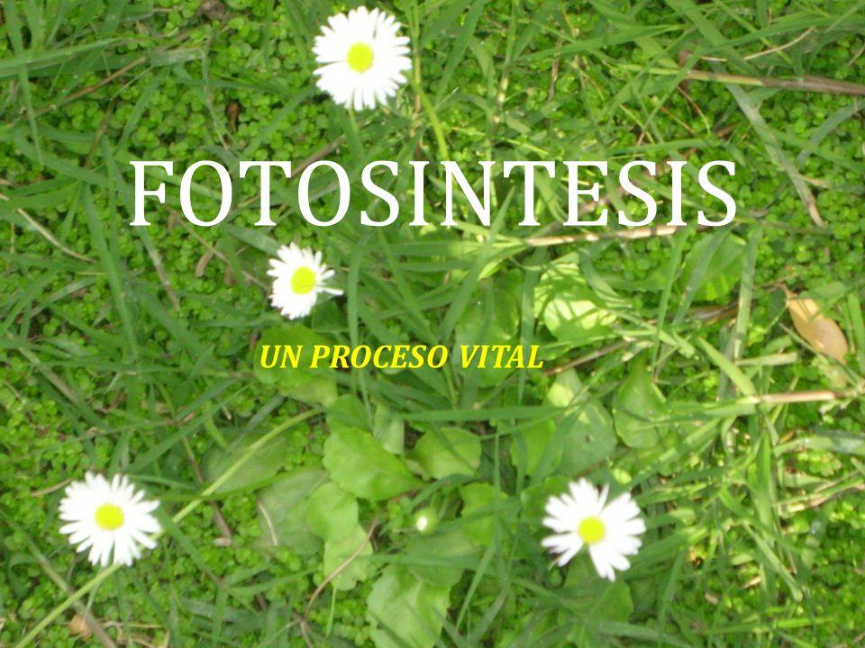 FOTOSINTESIS UN PROCESO VITAL