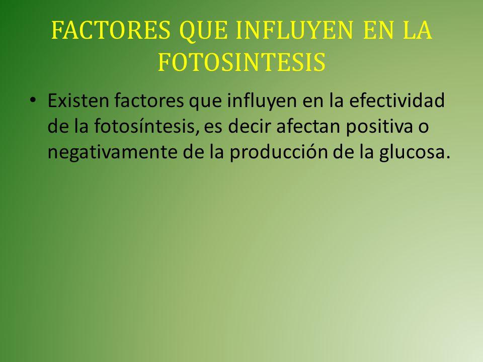 FACTORES QUE INFLUYEN EN LA FOTOSINTESIS
