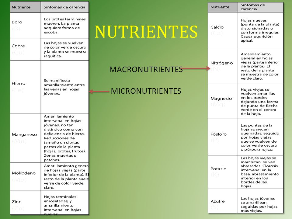 NUTRIENTES MACRONUTRIENTES MICRONUTRIENTES