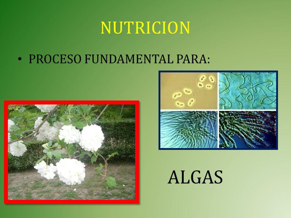 NUTRICION PROCESO FUNDAMENTAL PARA: ALGAS