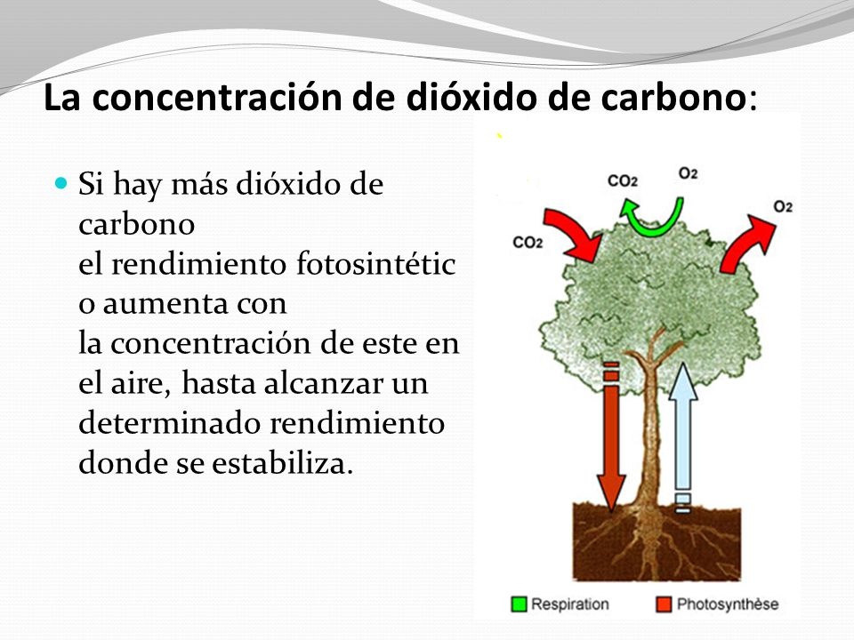 La concentración de dióxido de carbono: