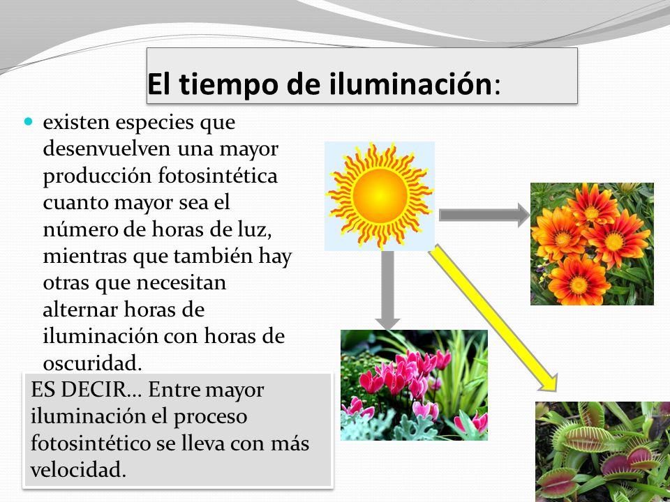 El tiempo de iluminación:
