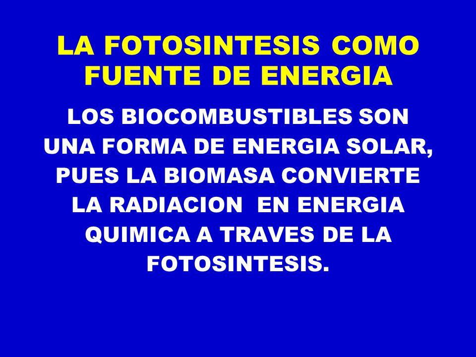 LA FOTOSINTESIS COMO FUENTE DE ENERGIA