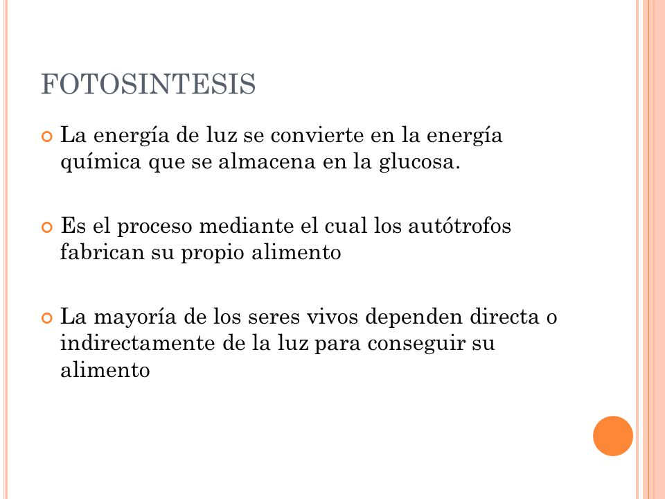 Fotosintesis. - ppt descargar