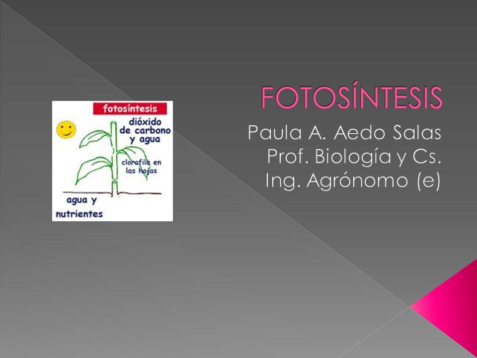 Paula A. Aedo Salas Prof. Biología y Cs. Ing. Agrónomo (e)