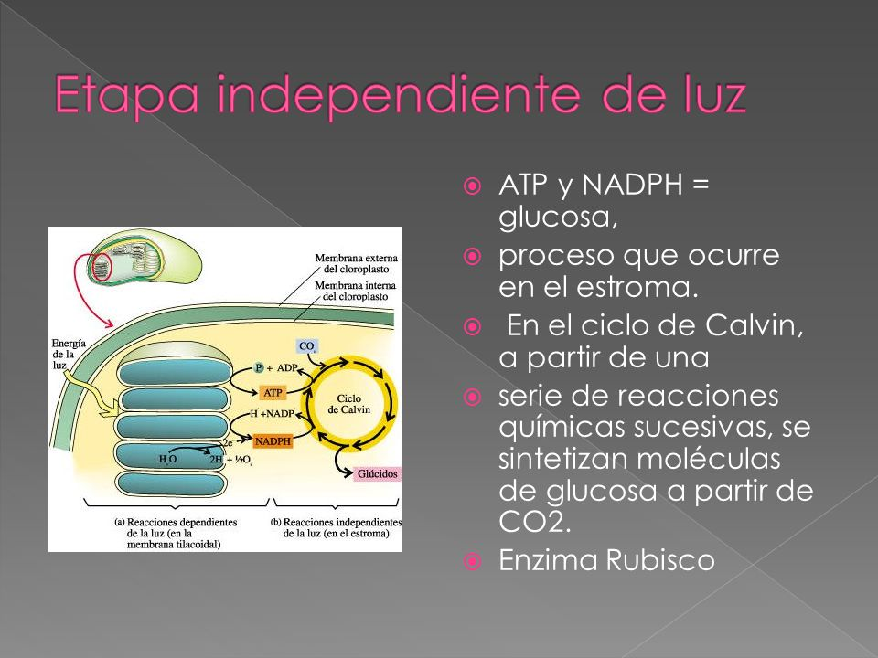 Etapa independiente de luz