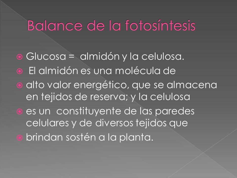 Balance de la fotosíntesis