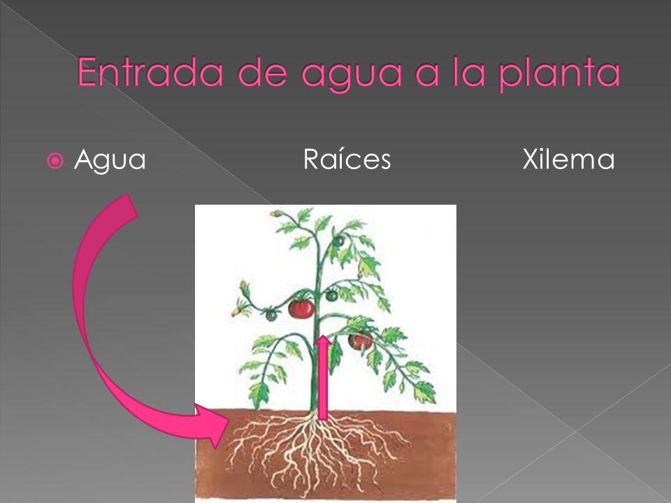 Entrada de agua a la planta
