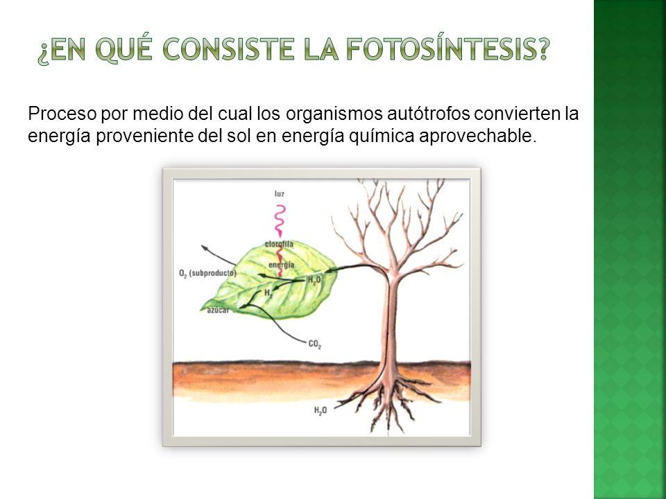 ¿En qué consiste la fotosíntesis