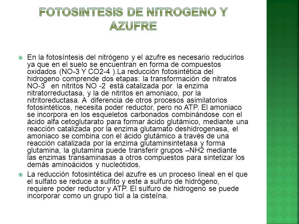 FOTOSINTESIS DE NITROGENO Y AZUFRE