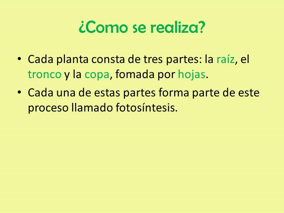 ¿Como se realiza Cada planta consta de tres partes: la raíz, el tronco y la copa, fomada por hojas.