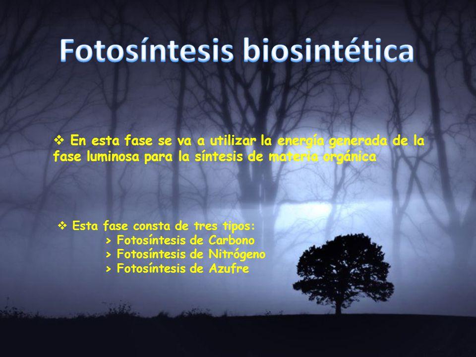 Fotosíntesis biosintética