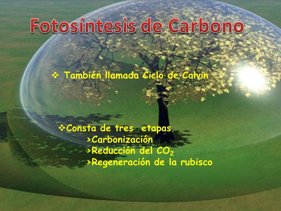 Fotosíntesis de Carbono
