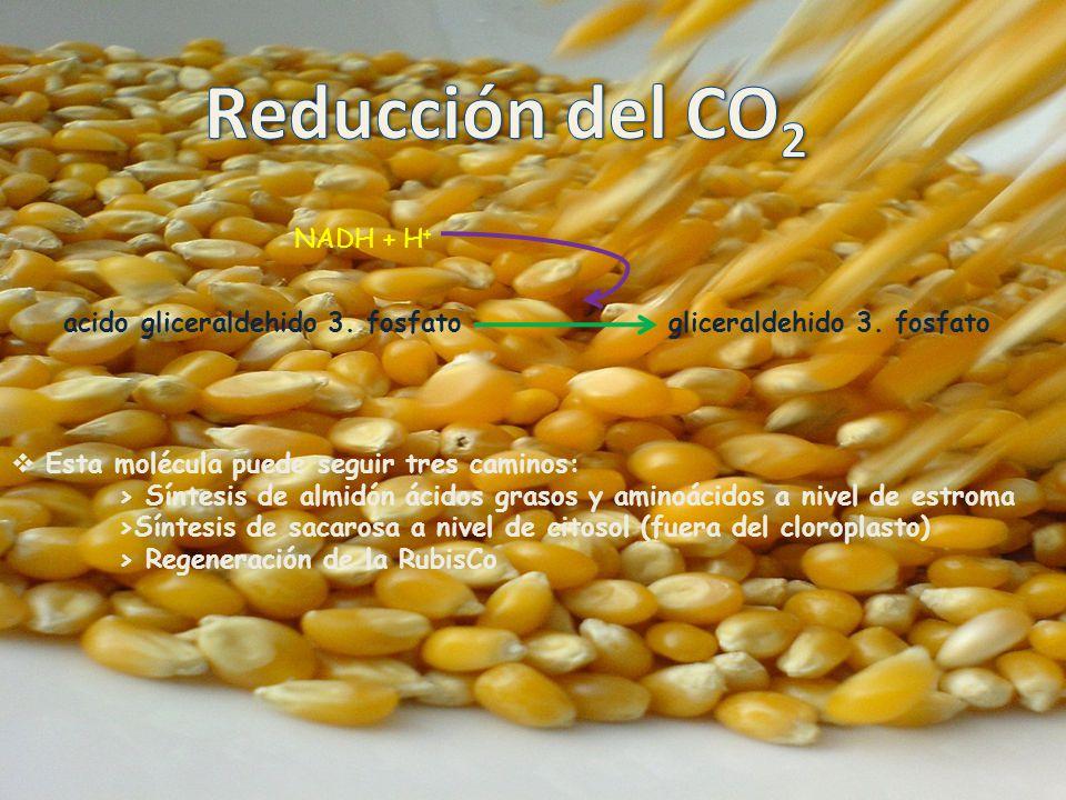 Reducción del CO2 NADH + H+