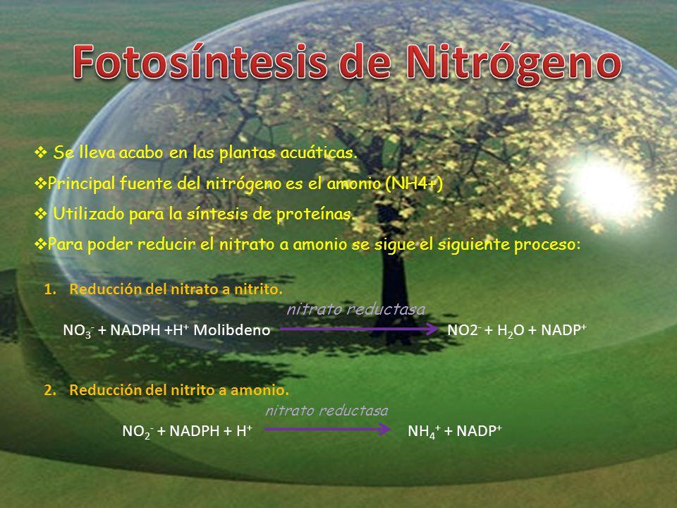 Fotosíntesis de Nitrógeno