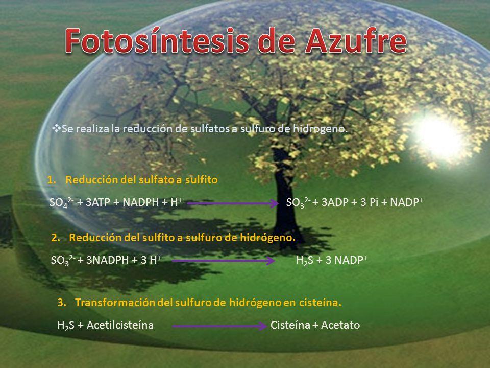 Fotosíntesis de Azufre