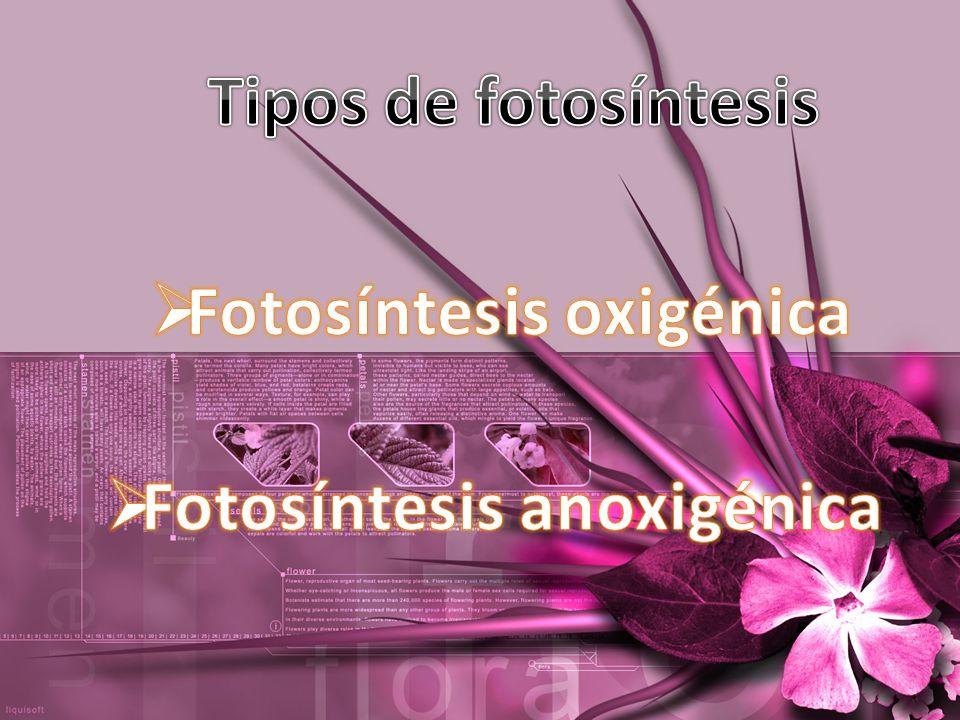 Fotosíntesis oxigénica Fotosíntesis anoxigénica