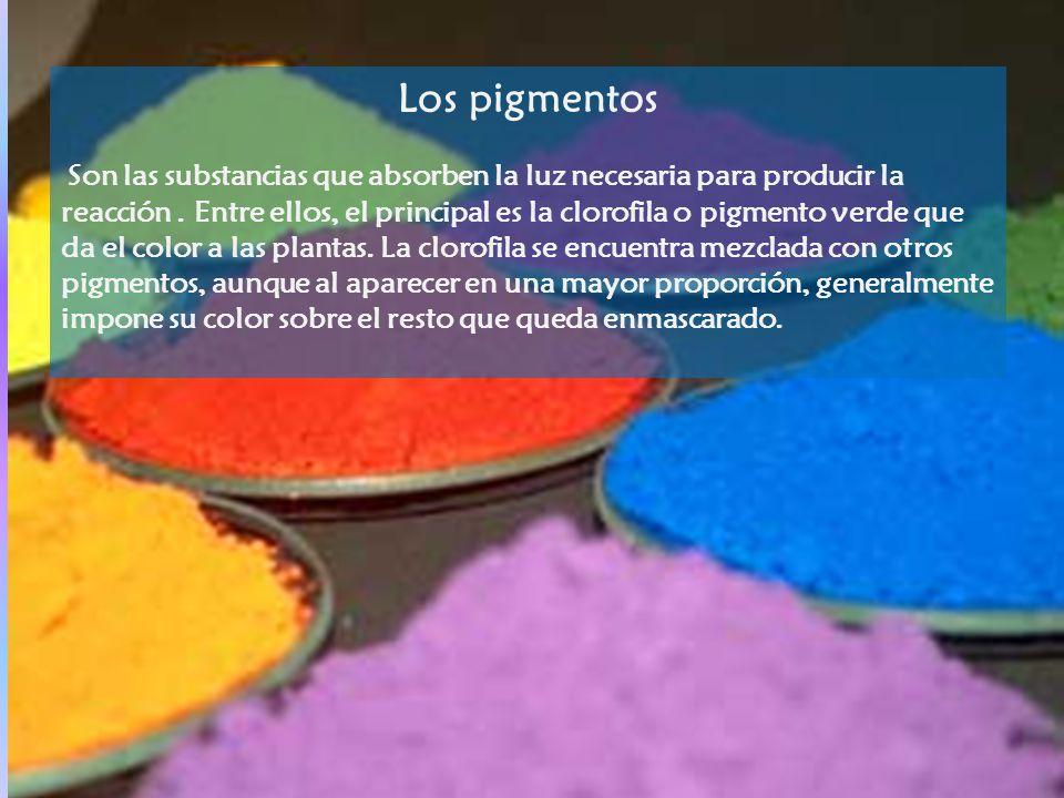 Los pigmentos