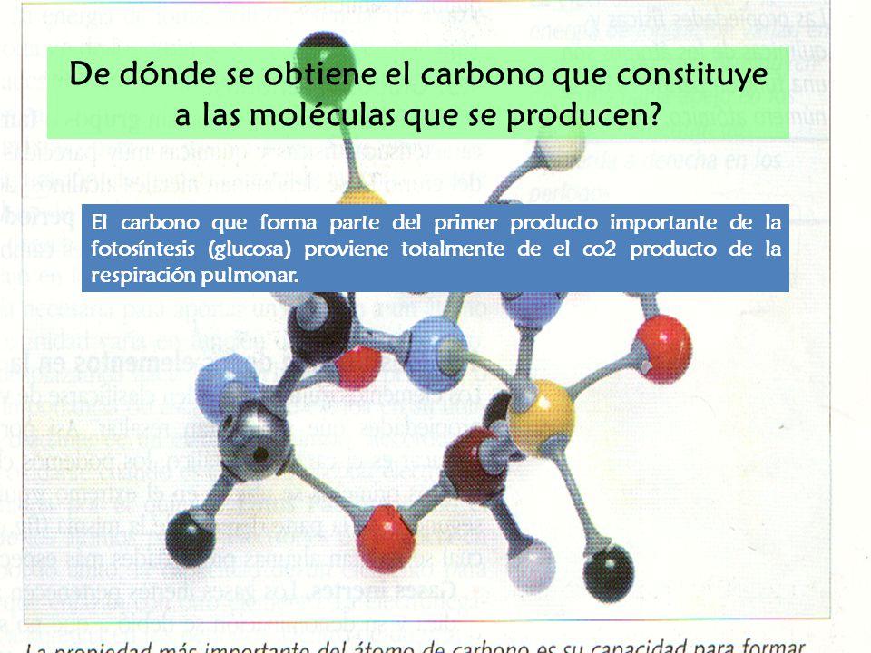 De dónde se obtiene el carbono que constituye a las moléculas que se producen